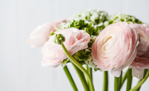 Ranunculus for Wedding
