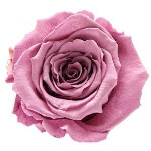 Rear roses buy online,