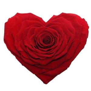 Heart shape of rose buy online