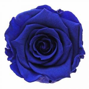 Blue roses buy