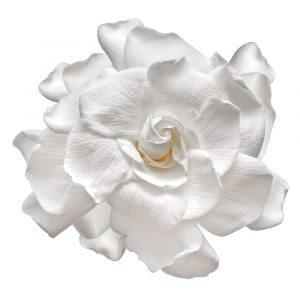 Forever flowers online